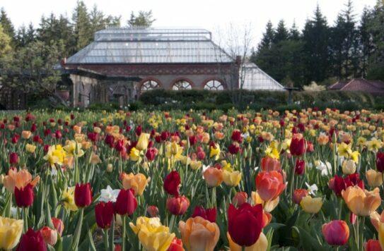 Biltmore Spring Blooms